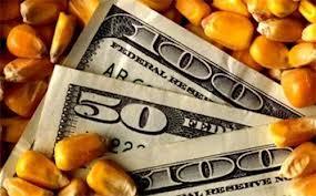 corn profits